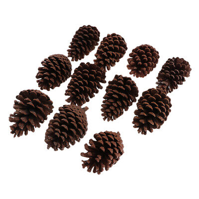 10x Natural Large 8-10cm Pine Cones In Bulk For Home Decoration Ornament
