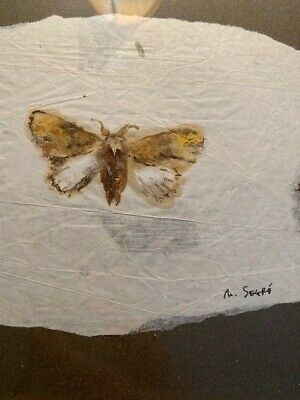 Early small moth painting by Michelle Segre contemporary NY artist ORIGINAL