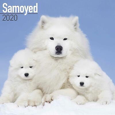 Samoyed 2020 Official Square Wall Calendar