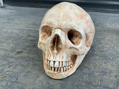 Life Size Skull Statue Sculpture Anatomy Medical Bust Gothic Tattoo Shop
