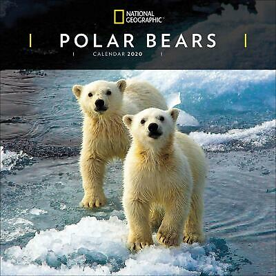 Polar Bears National Geographic 2020 Official Square Wall Calendar