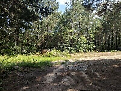 Land for Sale - East Texas - Near Neches, TX - Clear Deed
