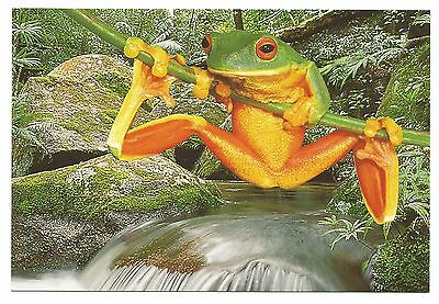 QLD/NSW - c2000s POSTCARD - RED-EYED TREE FROG, NORTH OF SYDNEY TO PROSERPINE