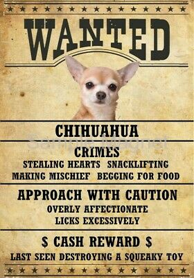 Killer Chihuahua On Duty Dog Sign Magnet Hook /& Loop Fastener 5x7