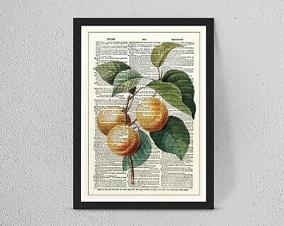 Vintage/Retro DICTIONARY Botanical Fruit Flower print/wall art A4/A3 Wall Decor