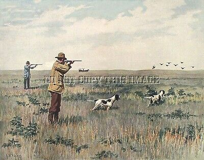 ANTIQUE 8X10  A B FROST PHOTOGRAPH REPRINT MUDHEN COOT HUNTING