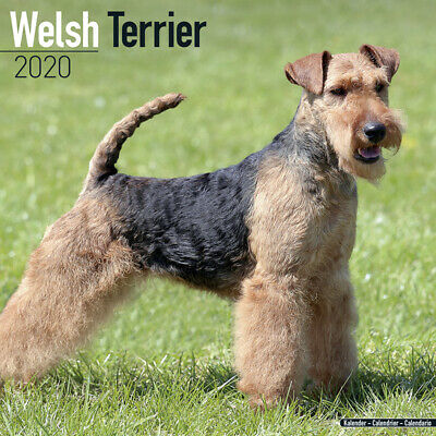 Kalender 2020 Welsh Terrier Welshterrier Dog Hund Wandkalender