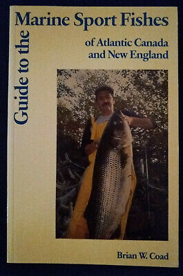 Guide to the Marine Sport Fishes of Atlantic by Brian Coad (Softcover, 1992)