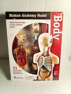 Learning Resources Human Body Model Educational Science & Nature Toys Anatomy