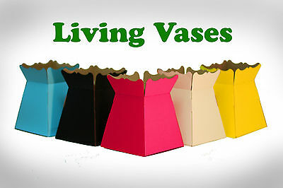 Living Flower Vases, 15 colours TRANSPORTER BOX, BOUQUET, FLORIST, CRAFT, GIFTS