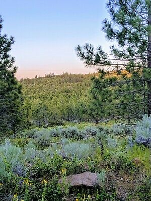 Beautiful NorCal Mobile Home Lot (7,935 sq ft)! Forest Land Near Alturas, CA