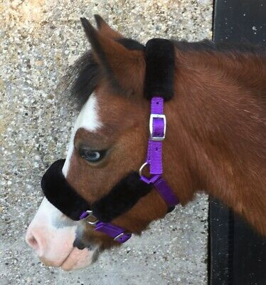 PONY OR DONKEY DINKY COMFORT HEADCOLLAR CHOICE OF 4 COLOURS