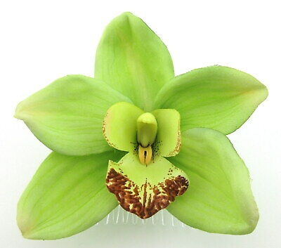 """Large 4.5"""" Lime Green Orchid Poly Silk Flower Hair Comb,PinUp,Updo,Rockabilly"""