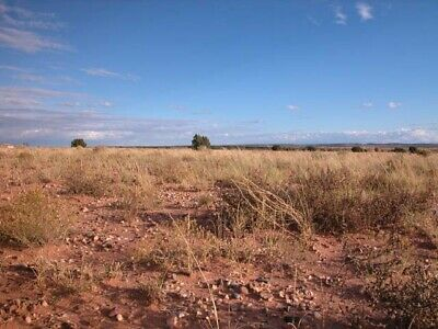 0.22 +/- Acre Investment Property 3 Hours from Phoenix, AZ!