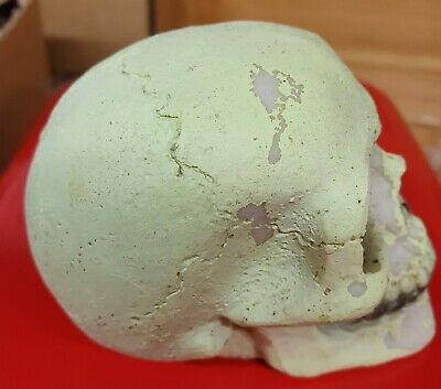"""LATEX MOULD MOLD OF A SMALL SKULL APPROX 3.5"""" X 2.5"""" X 2.5"""" tall"""