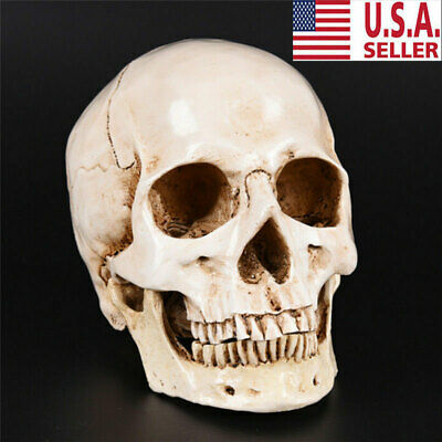 Retro Realistic Human Skull Replica 1:1 Model Medical Art Teach Life Size USA
