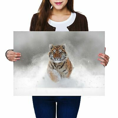 A2 - Awesome Siberian Tiger Big Cat Snow Poster 59.4X42cm280gsm #8600