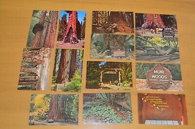 vtg California Muir Woods Giant Tree Forest Redwood postcard lot travel 60's 70s