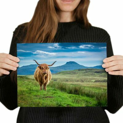 A4 Brown Angus Scottish Highland Cow Poster 29.7X21cm280gsm #16865