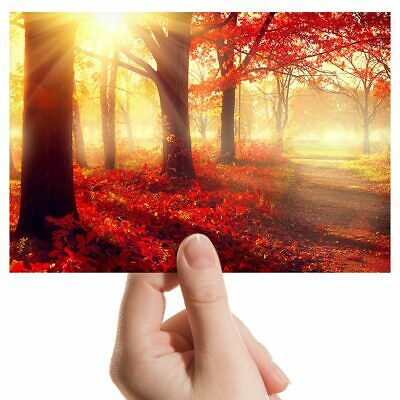 NATURE POSTER FOREST FALL COLORS AE035 Photo Poster Print Art A0 A1 A2 A3 A4