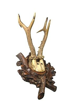 Vintage Austrian Trophy Mount, Oak Leaves with Roe Deer Antlers.