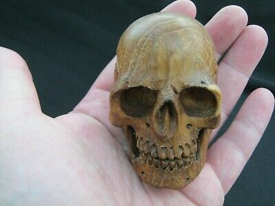 Unusual Hand Carved Anatomically Accurate Skull Memento Mori Teak Wood Dayak