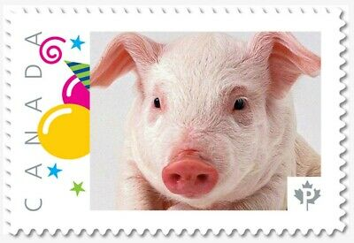 LUNAR Year of the PIG = PIGLET = Picture Postage MNH-VF Canada 2019 [p19-01s07]