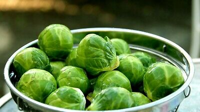 ***BRUSSELS SPROUTS Organic Seeds VEGETABLE Garden*** SPECIAL FREE