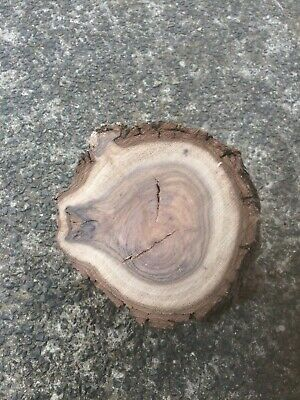 Walnut timber branch piece for wood turning carving etc