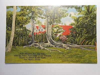 Old Postcard, FORT MYERS, FLORIDA, MORTON BAY FIG TREE, HENERY FORD HOME