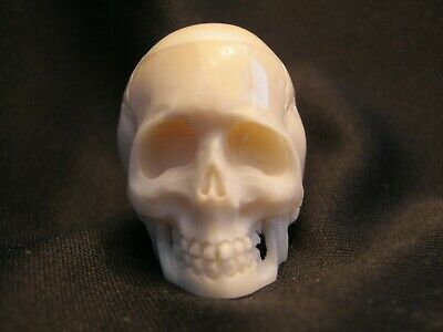 Unusual Hand Carved Anatomically Accurate Skull Memento Mori In Buffalo Bone