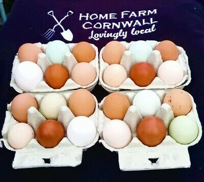 6 Mixed Fertile Hen/Chicken Eggs - for Hatching