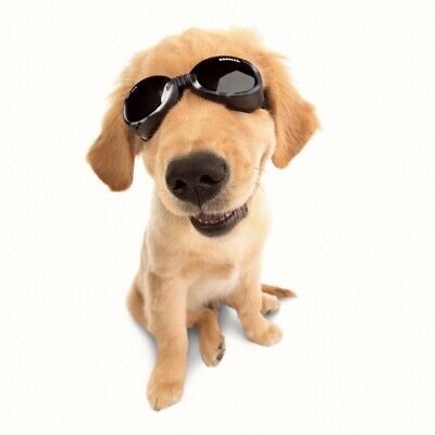 Doggles Goggles Sunglasses & Supplies for Dogs