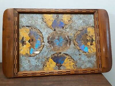 """Vintage Butterfly Wings Some Iridescent Blue Inlaid Wood Serving Tray 20"""" x 13"""""""