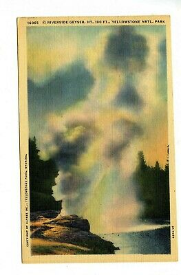 Postcard Yellowstone National Park Riverside Geyser