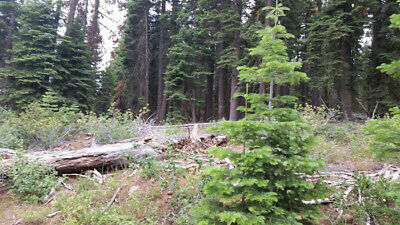 Secluded 1 Acre Treed Lot Cash Sale