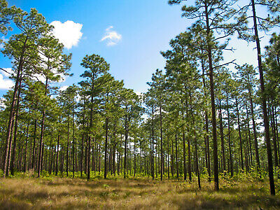1.25 AC Lot, close to Palm Coast, short drive to Disney, Florida, Bid on Payment