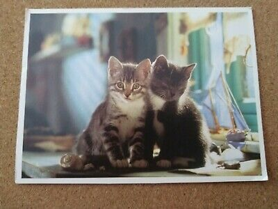 Modern Cat Postcard. Two adorable kittens. British.  Continental size.