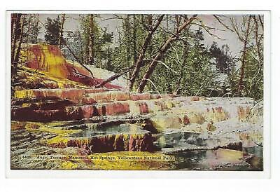 Angel Terrace, Mammoth Hot Springs, Yellowstone Park, Vintage Postcard