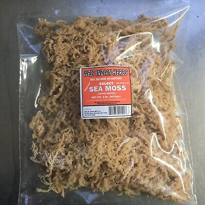 Sea Moss, IrishMoss West Indian Herbs 10LB Read Description BEFORE you buy!