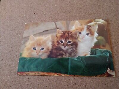 Vintage Cat Postcard. Three so cute kittens in basket. Chrome.