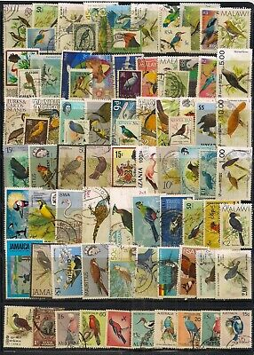Thematics-Super Selection Of 80 F/U Birds From The Commonwealth.very Nice Lot.