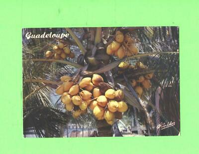 K Postcard Guadeloupe Cocotier Coconut Tree