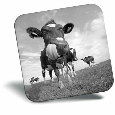 Classic Magnet With Stand Dairy Cow Friesian  #36512 BW