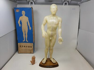 Model of a human body acupuncture Good Health vintage