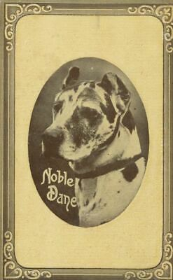 Old Embossed Art Postcard PC Noble Great Dane Dog USA 1911