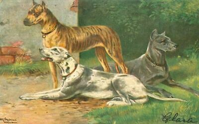 Vintage Postcard 3 Great Dane Dogs SIGNED from Germany 1906
