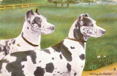 Vintage Tuck's Postcard 2 Great Dane Dogs Waiting for Master England c1908