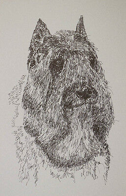 BOUVIER des FLANDRES DOG ART PRINT #32 Stephen Kline draws your dogs name free.