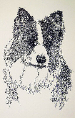 Border Collie Dog Art Print #236 DRAWN FROM WORDS Kline adds your dogs name free